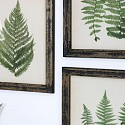 Framed Wall Art - Botanical Fern Prints