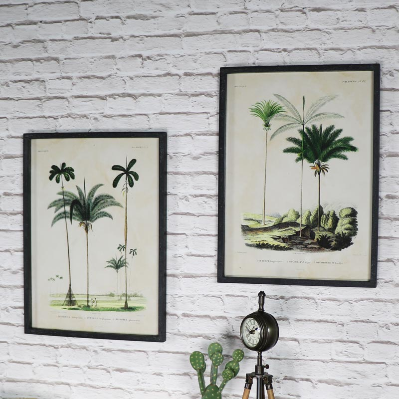 Pair of Wall Mounted Framed Palm Tree Prints