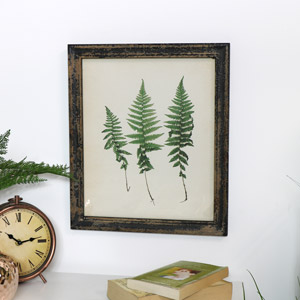 Rustic Triple Fern Framed Print